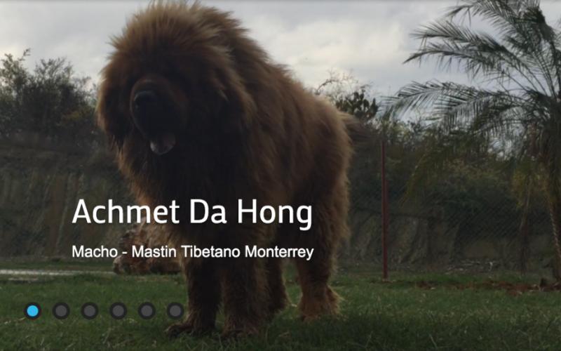 Achmet Da Hong