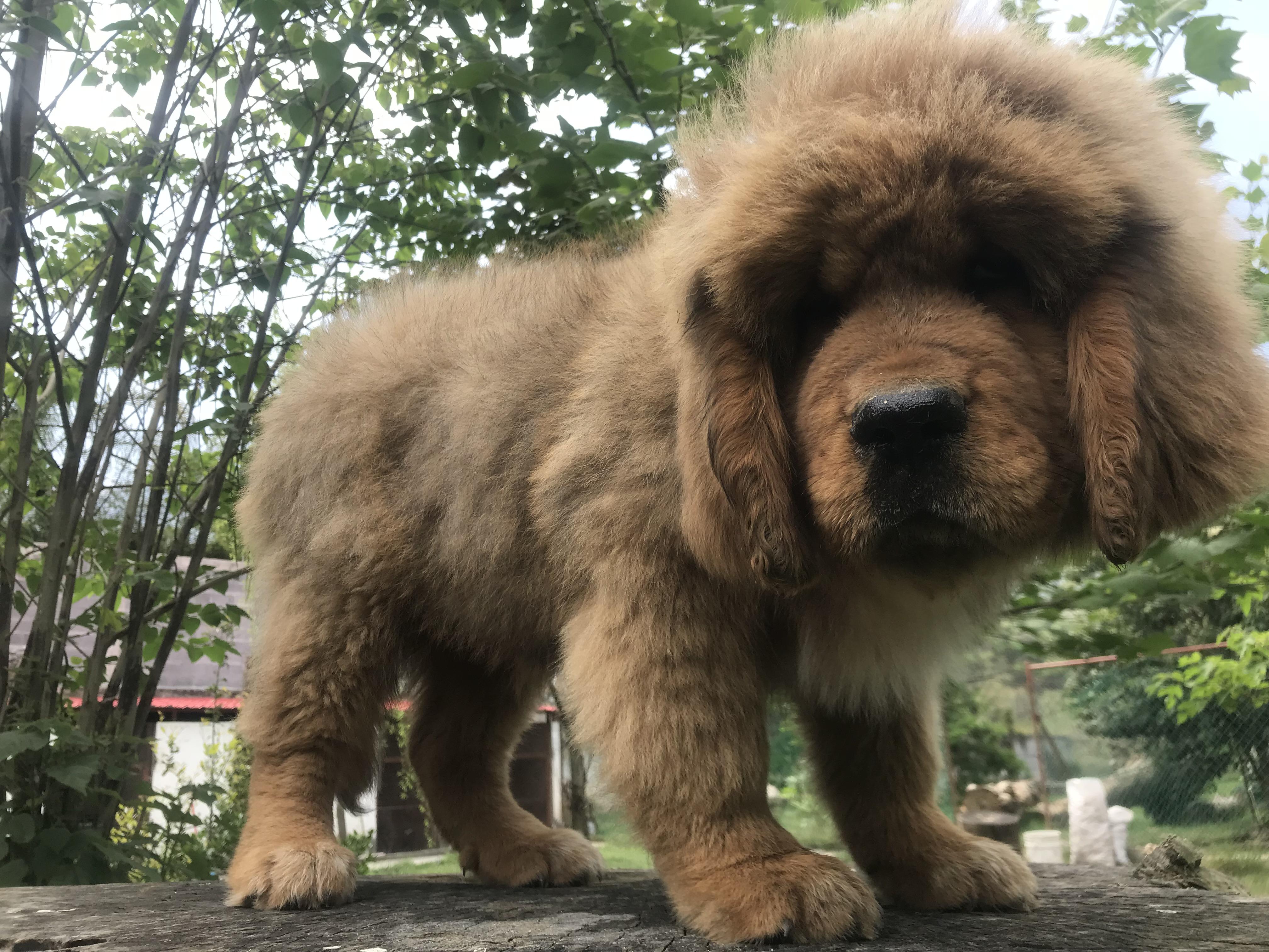 Cachorro hembra  27-12-2017
